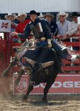 rodeo walka byka Obraz Stock