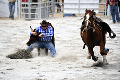 Rodeo Wrestling Stock Images