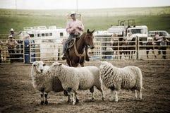 Rodeo y ovejas de los vaqueros Imagenes de archivo