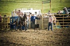 Rodeo y vaqueros Imagen de archivo