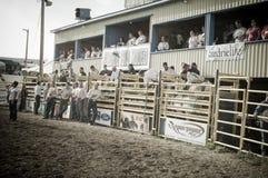 Rodeo y vaqueros Foto de archivo libre de regalías
