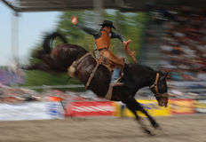 Rodeo: Zadel Bronc Stock Afbeelding