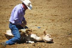 Rodeokalvbrottning Royaltyfri Foto