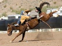 Rodeosträubender Bronc-Mitfahrer stockfotografie