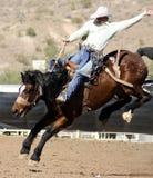 Rodeosträubender Bronc-Mitfahrer Lizenzfreie Stockfotografie