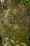 Rodi - 2007 Fotografie Stock Libere da Diritti