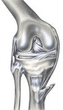 Rodilla - huesos, ligamentos y músculos Fotos de archivo