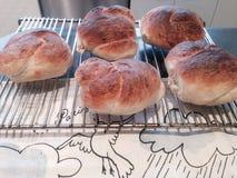Rodillos de pan recientemente cocidos al horno Fotos de archivo libres de regalías