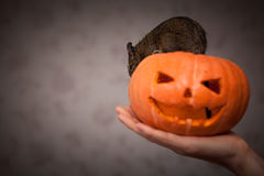 Roditore in zucca di Halloween Immagini Stock
