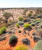 Środkowa Australia scena Obrazy Royalty Free