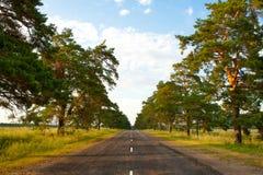 środkowa stara parkowa sosnowa droga Zdjęcia Royalty Free