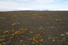 Środkowy Iceland Obrazy Royalty Free