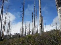 Środkowy Oregon niebo Obraz Stock