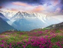 Rododendri alpini sui giacimenti della montagna di Chamonix-Mont-Blanc fotografie stock