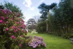 rododendro 免版税库存图片