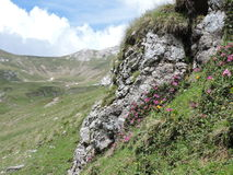 rododendro Fotografia Stock Libera da Diritti