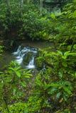Rododendro & cachoeiras, Greenbrier, Great Smoky Mountains NP foto de stock