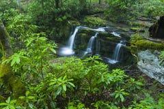 Rododendro & cachoeiras, Greenbrier, Great Smoky Mountains NP fotografia de stock