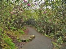 Rododendro che fiorisce lungo la traccia dei campi del cimitero Immagini Stock