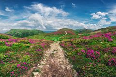 Rododendro cor-de-rosa mágico fotografia de stock royalty free