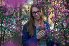 Rododendro de floresc?ncia do maralnik em montanhas de Altai imagens de stock royalty free