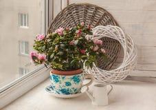 Rododendro de la azalea en pote del vintage en la ventana fotos de archivo libres de regalías