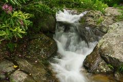 Rododendro di Catawba e cascate precipitanti a cascata sull'insenatura di Fallingwater fotografia stock