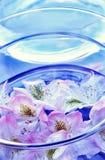 Rododendro - fiori immagine stock