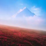 Rododendro floreciente en las altas montañas Imagen de archivo