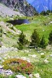 Rododendro in montagna Fotografia Stock