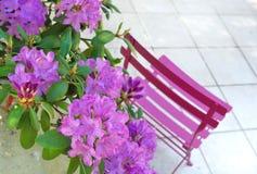 Rododendro nel terrrace Fotografie Stock