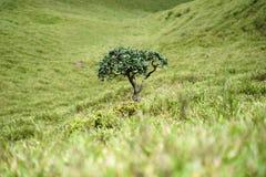 Rododendro solo Imagenes de archivo