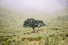 Rododendro solo Fotos de archivo