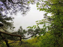 rododendron Royalty-vrije Stock Foto's