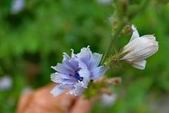 花rododendron 免版税库存图片