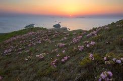 Rododendron die op de kust bij dageraad bloeien Stock Afbeelding