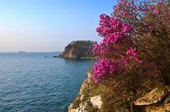 Rododendron die op de kust bloeien Royalty-vrije Stock Afbeelding