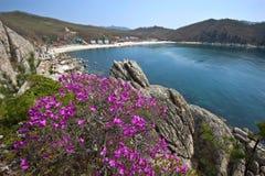 Rododendron die op de kust bloeien Royalty-vrije Stock Foto's