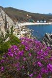 Rododendron die op de kust bloeien Royalty-vrije Stock Fotografie