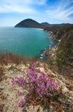 Rododendron die op de kust bloeien Stock Foto's