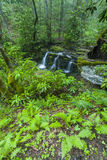 Rododendron & Watervallen, Greenbrier, Great Smoky Mountains NP Royalty-vrije Stock Fotografie