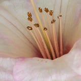 Rododendronowi Mieszkanowie obrazy royalty free