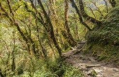 Rododendronowy las Zdjęcie Stock