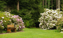 Rododendrontuin Royalty-vrije Stock Fotografie