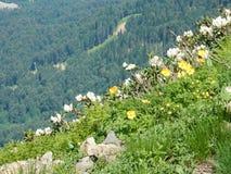 Rododendros da montanha Imagem de Stock Royalty Free
