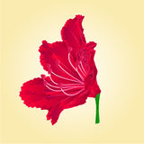 Rododenrodon red flower isolated vector Royalty Free Stock Photography