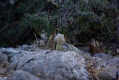 Rodos, Mountain, Lizard. On Stone Stock Photos