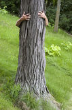 środowiska ekologa uściśnięcia hugger save drzewa Obrazy Stock