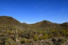 Środowisko kaktusów drzewa Obraz Royalty Free