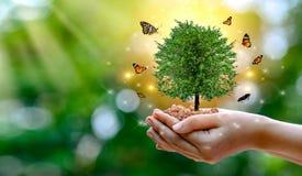 ?rodowisko Ziemski dzie? W r?kach drzewa r rozsady Bokeh zielenieje t?o r?ki mienia ?e?skiego drzewa na natury polu zdjęcia royalty free